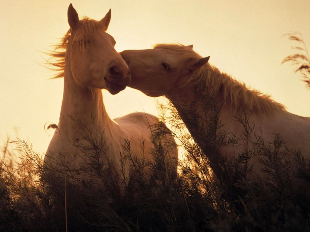Great Wallpaper Horse Vintage - horses_wallpapers_1721  HD_258849.jpg
